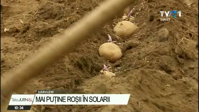 multi-legumicultori-renunta-sa-mai-cultive-rosii,-pentru-ca-nu-se-mai-acorda-ajutorul-de-la-stat