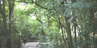 Curitiba ganha nova área de proteção ambiental no Pilarzinho