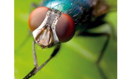 Conheça mais a vida da mosca