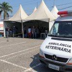 Castração gratuita de cães e gatos no Pinheirinho