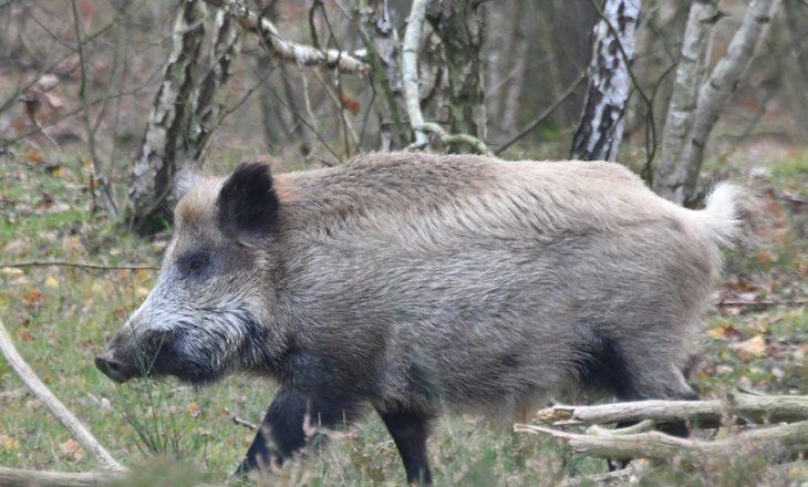 Vr-itet derri i egër në Zhur pasi sulmon banorët