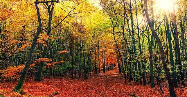 Od dzisiaj mamy jesień!