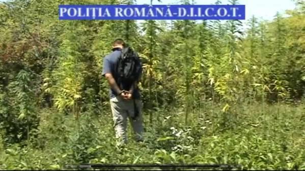 Cinci tineri fugiţi de acasă îşi făceau de cap în Câmpina cu droguri şi televizoare furate