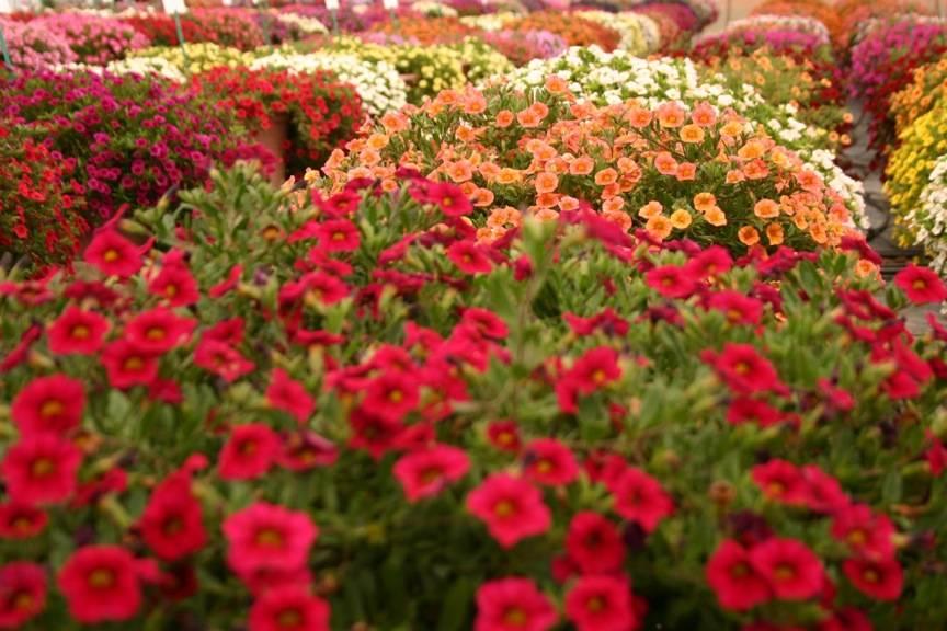 PLOIEŞTI/Se aproviziona cu flori direct din cimitirul Mihai Bravu