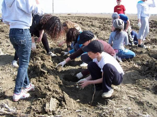 Acţiune de ecologizare şi plantare în parcul din zona Lămâiţa