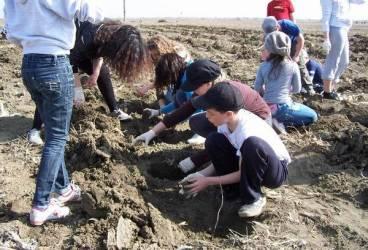 23 de hectare de teren din Ciorani, plantate de elevi cu… fapte bune GALERIE FOTO