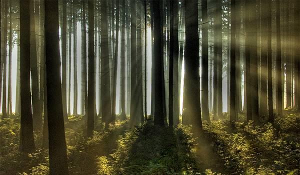 S-a rătăcit în pădurea Plopeni