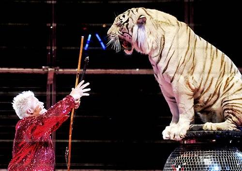 Tigrii albi vin la Ploieşti, într-un spectacol de zile mari. Află cum poţi primi GRATIS bilet