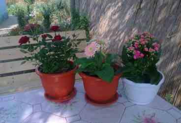 Femeie de 69 de ani cercetată pentru furtul a 64 de ghivece cu flori