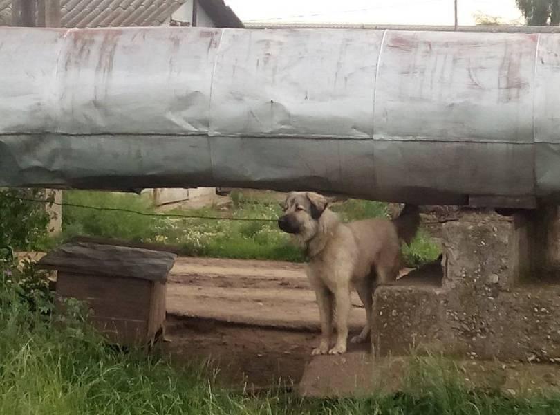 Cu ce eşti întâmpinat în Parcul Municipal Vest: Câini fioroşi şi un miros insuportabil