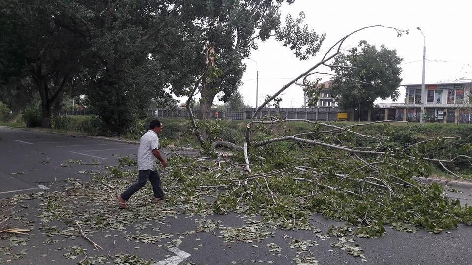 Copacii de la Obor cad pe maşini şi în capul trecătorilor