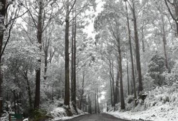 Ninge pe Valea Prahovei. Cum se circulă