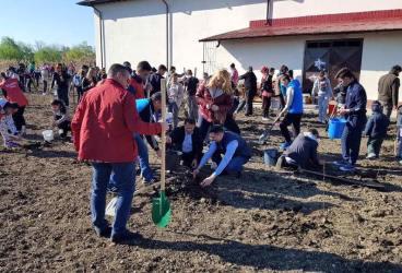 1.000 de puieţi de salcâm plantaţi la Tomşani