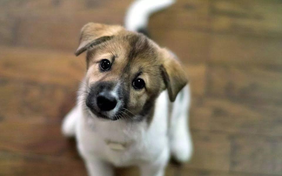 Campanie de adopție a câinilor abandonați, la Ploiești