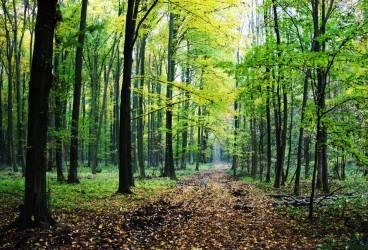 Tânără de 19 ani, violată şi ucisă într-o pădure de lângă Ploieşti