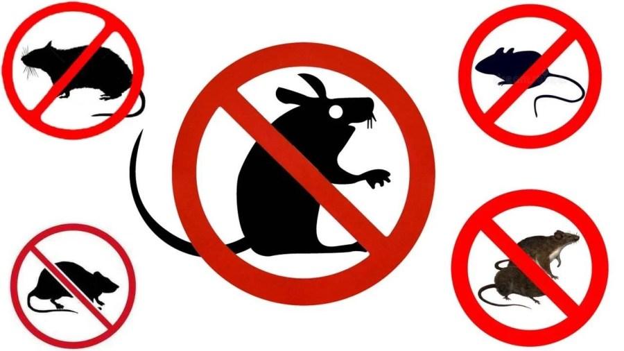 Prevenția este cel mai bun mod de a ține șoarecii departe
