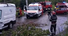 Un copac s-a prăbuşit la Câmpina, peste un autoturism aflat în mers