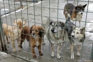 Câinii de la Sărăceşti, în aşteptarea stăpânilor
