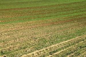 Condiții optime în agricultură