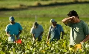 Muncitorii români sunt rugați de angajatorii străini să se întoarcă la muncă