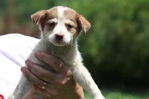 Câinii comunitari din Scornicești vor fi duși într-un adăpost