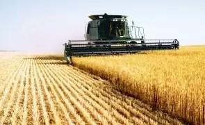 Fenomenele meteo modifică comerţul mondial cu grâu