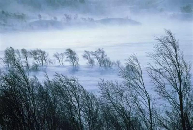 vant-iarna