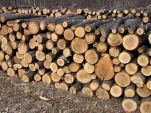 Direcția Silvică Olt vinde lemne pentru foc
