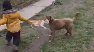 O mamă își îndeamnă copilul să maltrateze un pui de pisică. Poliția Animalelor a intervenit