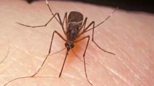 Un oltean a murit din cauza infecției cu virusul West Nile, transmis de țânțari