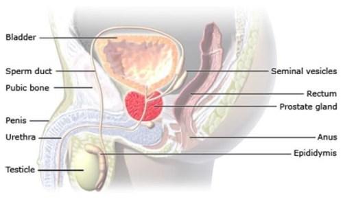 Si funksionon prostata dhe kur duhet operuar atë ?