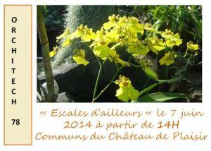 plaisir_escales -d-ailleurs-orchidees_2014-06