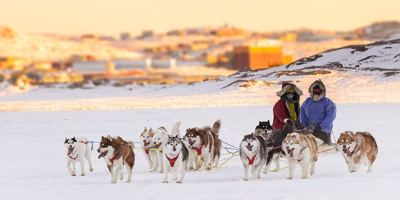 A dog sled team outside the city of Iqaluit.