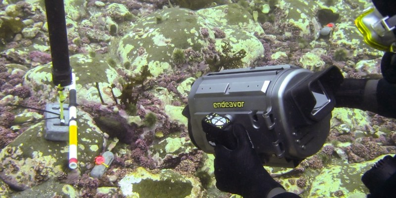 Diver underwater holds piece of equipment to study sea cucumbers