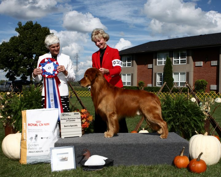 Dr. Mary Bluechardt with her golden retriever, Humber.