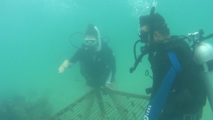 Christa Sandall and dive partner work on a marine survey.