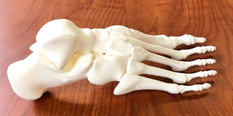Anatomical foot for learning.