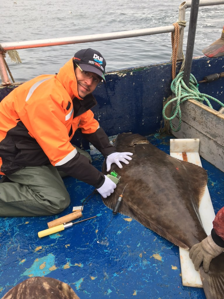 Dr. Arnault Le Bris in the field placing satellite tags on an Atlantic halibut.