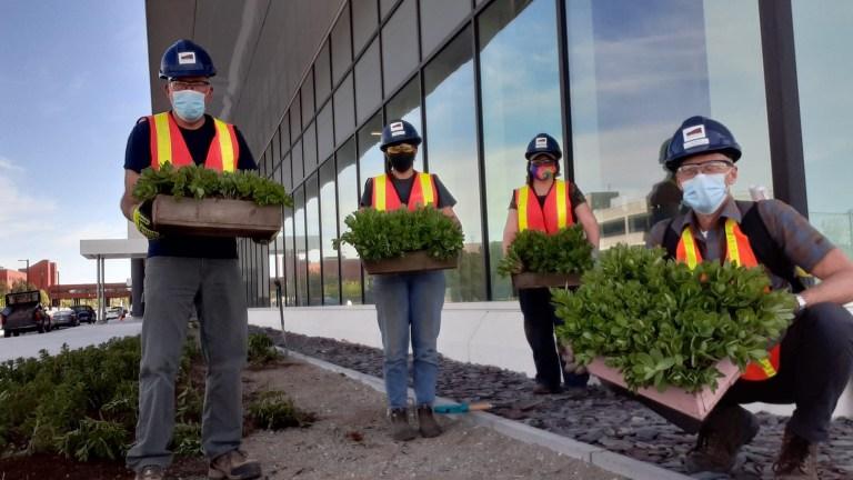Botanical Garden staff planting Autumn Joy Sedums at the new Core Science Facility