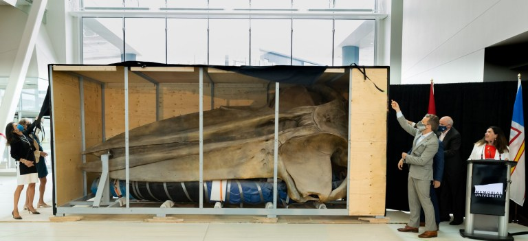 A blue whale skull is shown inside a wooden crate. Senior leadership members are to each side pulling back a black curtain.