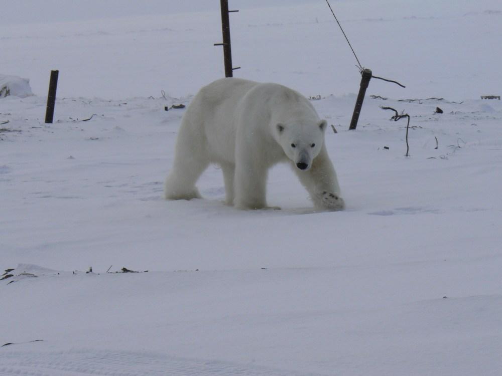 P1000622 Медведь
