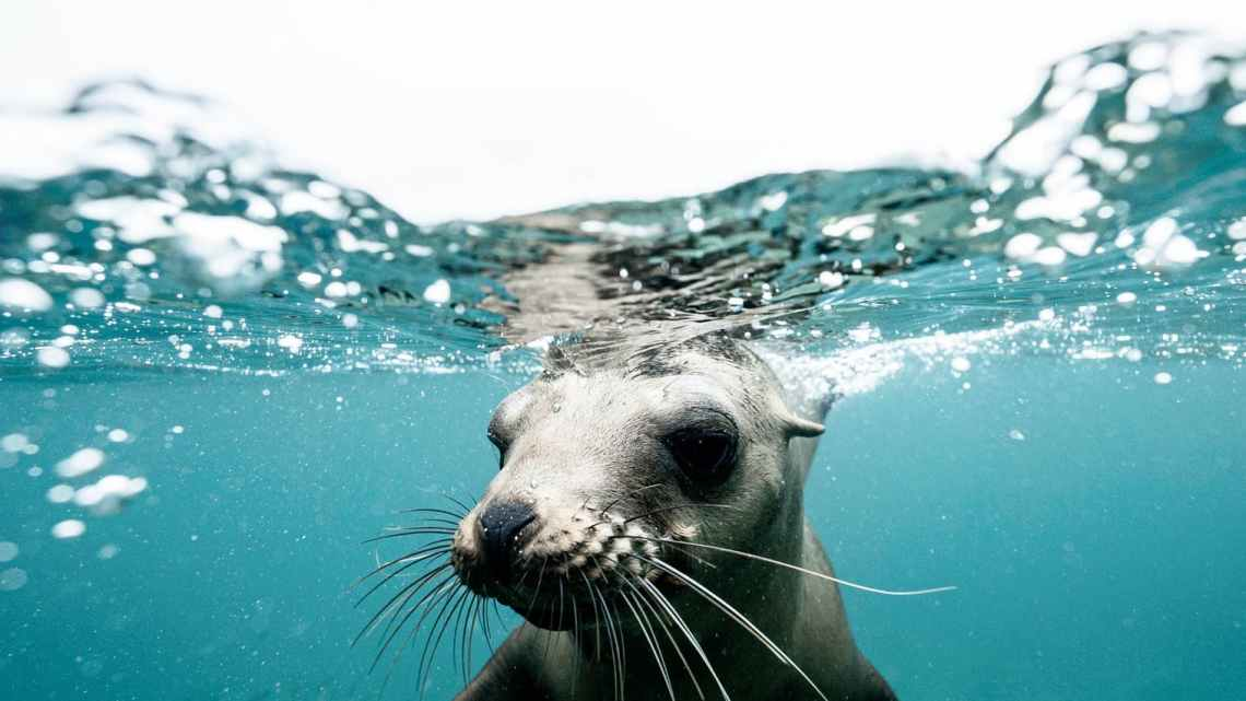cute seal on crystal clear water