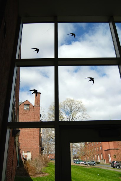 I love these paper birds in the window.
