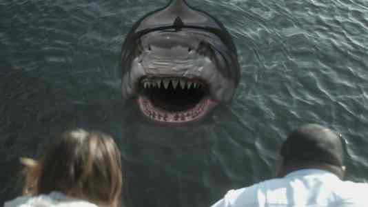 Zombie Shark 6
