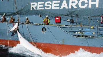 Sea Shepherd Claims It Will Stay Away From Japan Whaling Ships