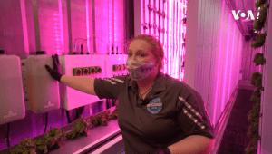 Hope Neis, coordinadora de la granja hidropónica