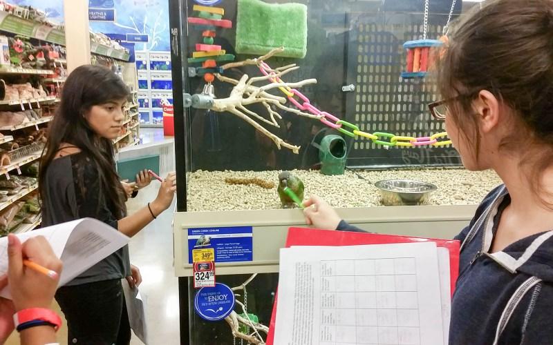 Anatomy Project at PetSmart