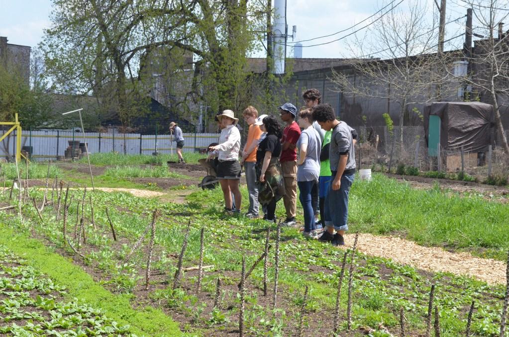 Urban Farming @ Chicago Patchwork Farms