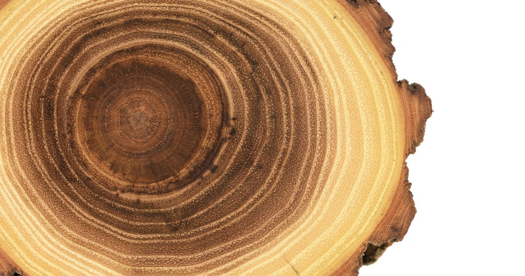 Time: Tree rings
