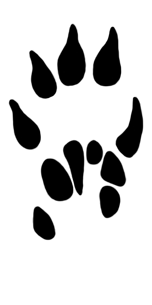 Dog Paw Print Frame Clipart - The Best Dog 2018